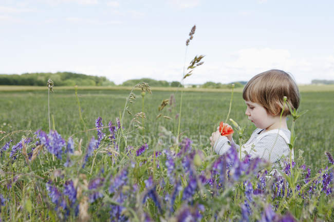Curious girl picking wildflowers in rural field — Stock Photo