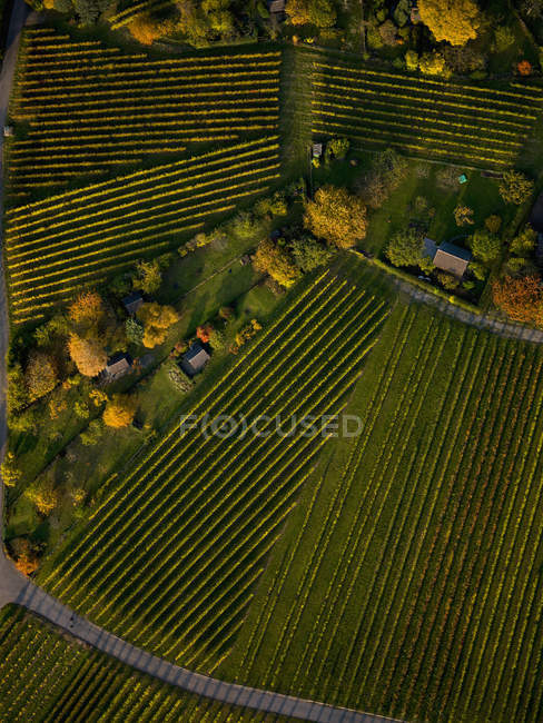 View from above textured green farmland crops — Stock Photo