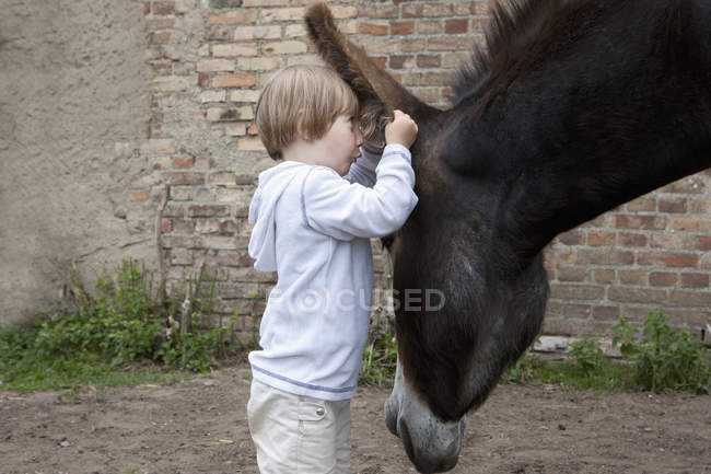 Curious girl looking in ear of donkey — Stock Photo