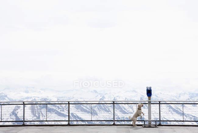 Hund, springen bis Münze betrieben Fernglas mit Blick auf verschneite Berge, Wiendorf, Mecklenburg-Vo — Stockfoto