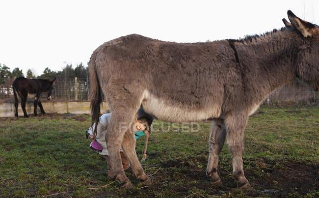 Jolie fille se cachant sous l'âne dans les pâturages — Photo de stock