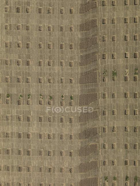 Vista de terras agrícolas texturizadas acima — Fotografia de Stock
