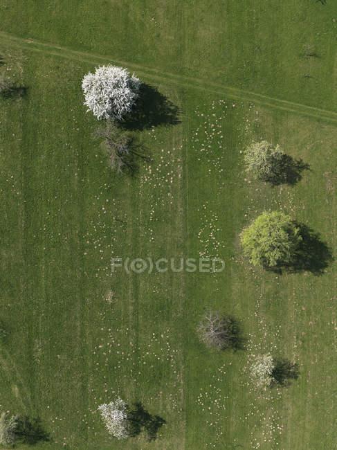 Champ vert rural vue aérienne et les arbres, Hohenheim, Bade-Wurtemberg, Allemagne — Photo de stock