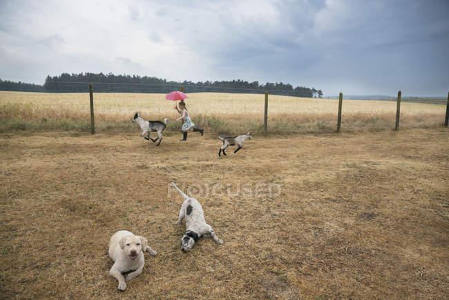 Menina brincando na fazenda com cabras e cachorros — Fotografia de Stock