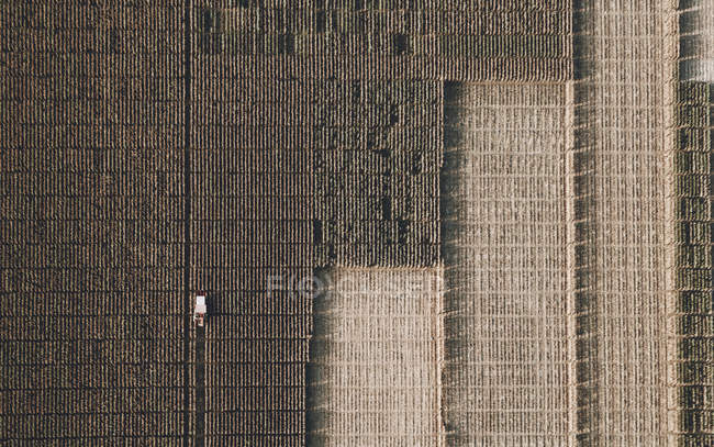 View from above combine harvester harvesting crop — Stock Photo