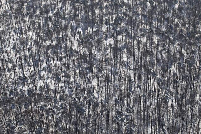 Vista aérea bosque nevado de árboles - foto de stock