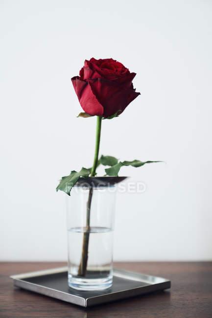 Одна красная роза в стакане с водой на подносе — стоковое фото