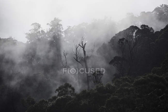 Fog over forest trees, Falls Creek, Victoria, Australia — Stock Photo