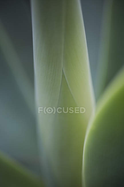 Extreme close up green, curled plant — Stock Photo