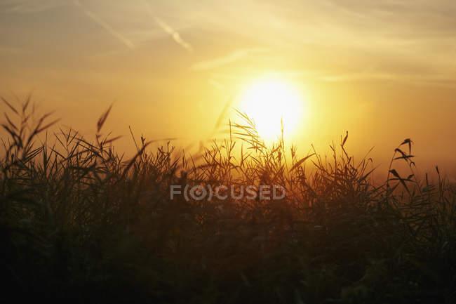 Pôr-do-sol idílico sobre o campo rural — Fotografia de Stock