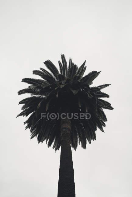 Palm tree against sky, Los Angeles, California, USA — Fotografia de Stock