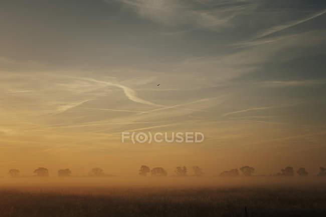 Idílico ao nascer do sol sobre a terra, Leopoldshagen, Mecklenburg-Vorpommern, Alemanha — Fotografia de Stock