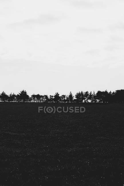 Black and white trees lining rural field — Stock Photo