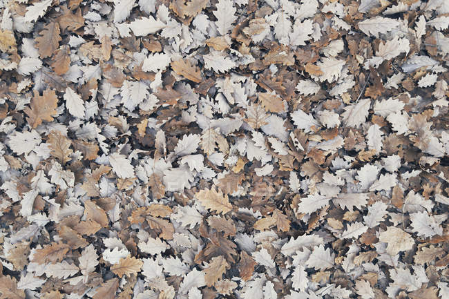 Full frame heap of brown autumn leaves — стокове фото