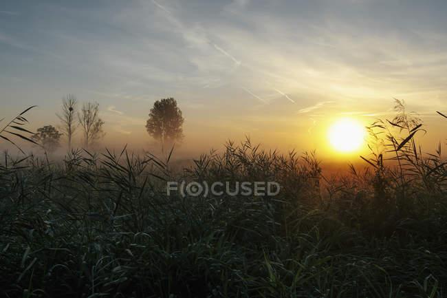 Идиллический и спокойный восхода и туман над сельских полей, Леопольдсхаген, Мекленбург-Передняя Померания, Германия — стоковое фото