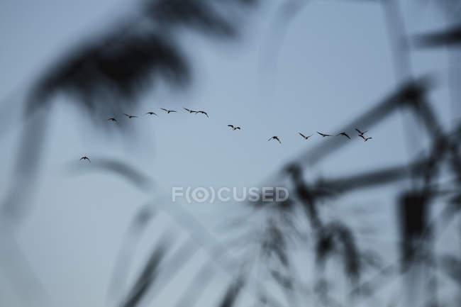 Силуэт птицы против голубого неба — стоковое фото