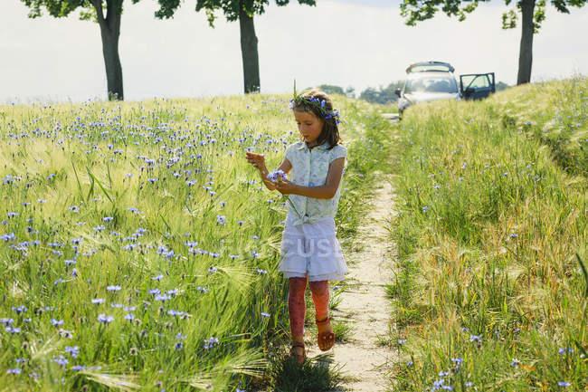 Girl picking purple wildflowers in sunny, idyllic rural field — стоковое фото