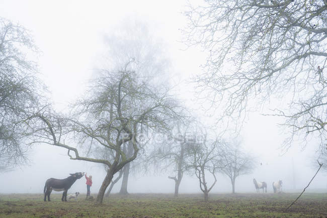 Girl with dog and donkey on foggy rural farm — Stock Photo