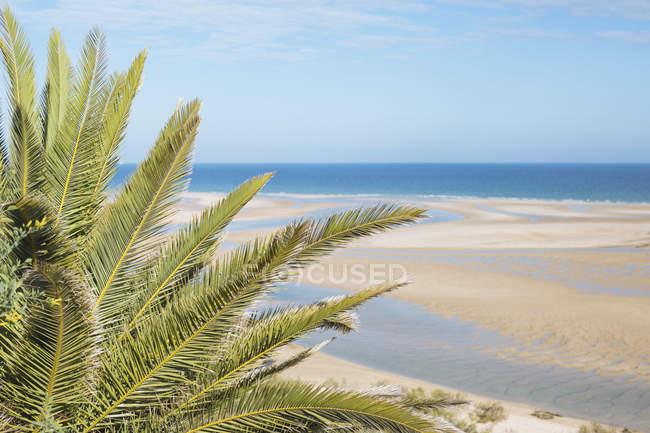 Tranquillo, idilliaca scena palma tropicale e soleggiata spiaggia sull'oceano, Cacela Velha, Algarve, Portogallo — Foto stock
