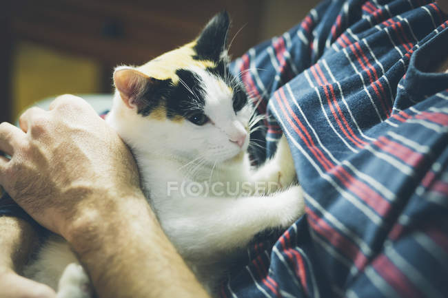 Man holding cat in hands — Stock Photo