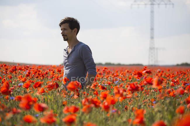 Hombre de pie en el soleado e idílico campo de amapola roja rural - foto de stock