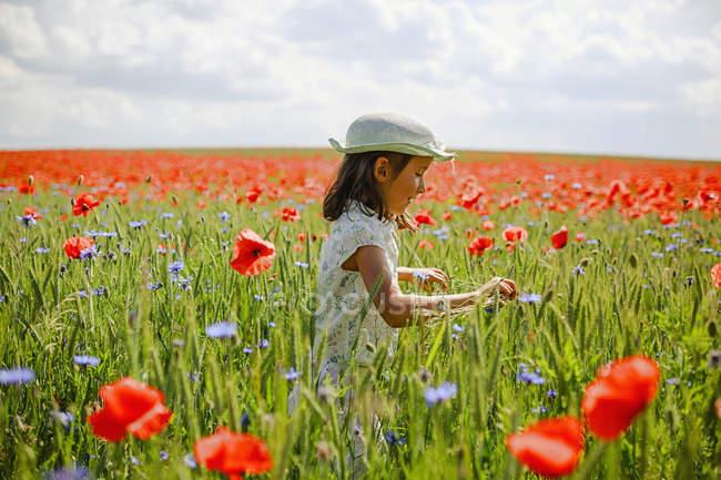 Curieuse fille au soleil, idyllique champ de pavot rouge rural — Photo de stock