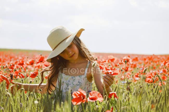 Serene fille cueillette coquelicots rouges dans ensoleillé, champ rural idyllique — Photo de stock