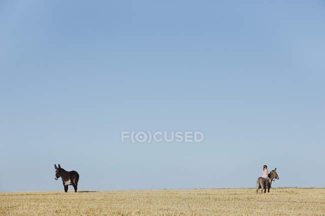 Ragazza a cavallo asino nel soleggiato campo rurale — Foto stock