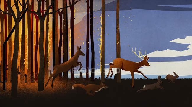 Forest animals running from forest fire at night — Stock Photo