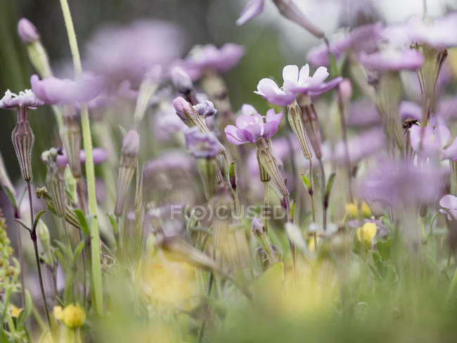 Purple flowers on field during daytime — Stock Photo