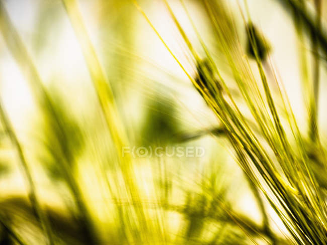 Extreme close up green blades of grass — Stock Photo