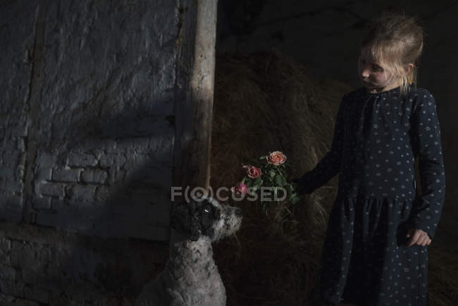 Girl showing flowers to curious dog in barn — Stock Photo
