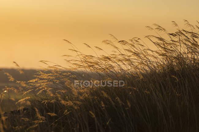 Tranquillo erba alta al tramonto, Kakadu National Park, Australia — Foto stock