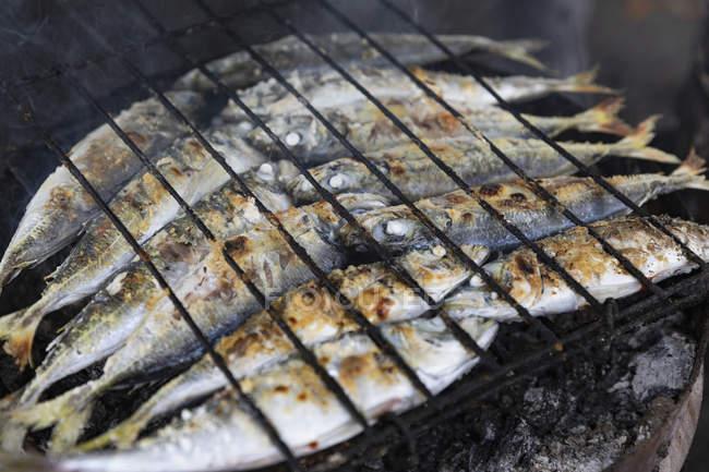 Целые сардины приготовления пищи на барбекю гриль — стоковое фото