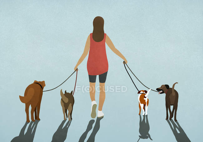 Woman walking four dogs on leashes — Stock Photo
