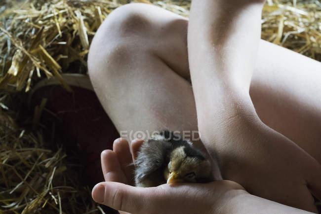 Gros plan fille tenant bébé poussin — Photo de stock