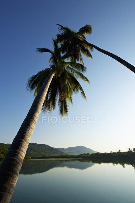 Palm trees over tranquil, idyllic sunny lake, Platinitos, Nayarit, Mexico — стокове фото