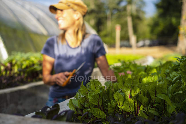 Felice agricoltore femmina che raccoglie verdi di tarassaco rosso fresco — Foto stock