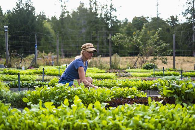 Agricultrice s'occupant de plantes potagères — Photo de stock