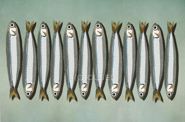 Sardines in row on green background — Stock Photo