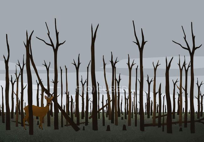 Глибоко стоїть серед обгорілих дерев у лісі після пожежі. — стокове фото