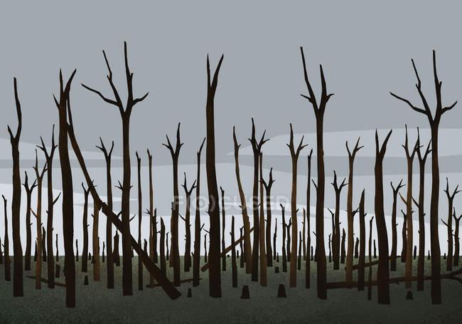 Спалені дерева в лісі після пожежі. — стокове фото