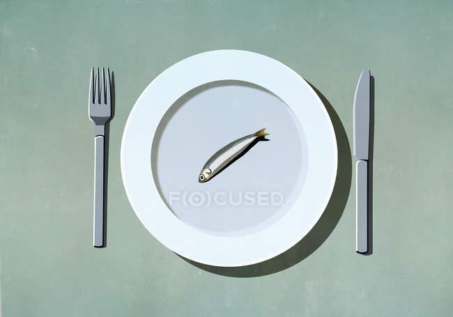 Sardina singola su piatto — Foto stock