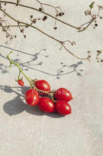 Дозрілі червоні помідори ростуть на винограді. — стокове фото