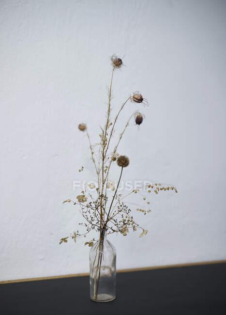 Tiges de plantes pointues dans un vase bouteille en verre — Photo de stock