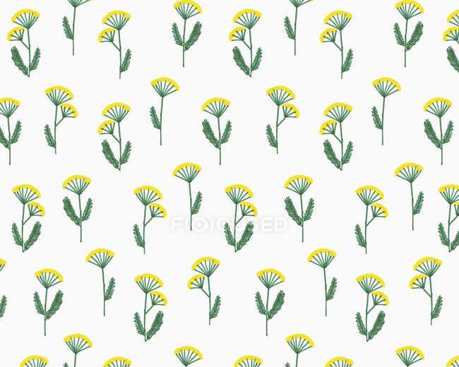 Ilustração de flores de yarrow no fundo branco — Fotografia de Stock