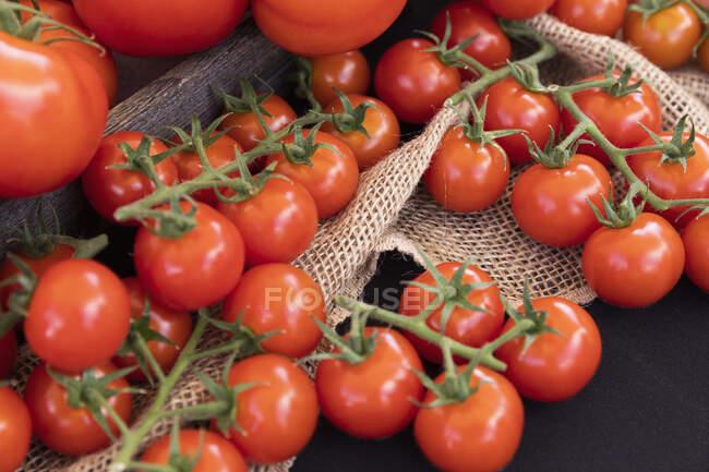 Tomates rouges vibrantes fraîchement récoltées — Photo de stock
