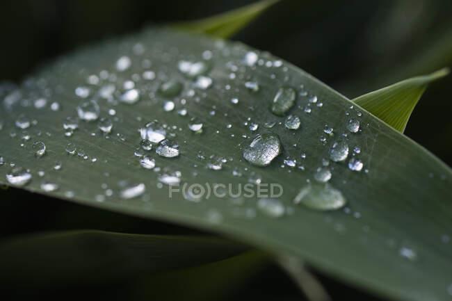 Fermer gouttes de pluie fraîches sur feuille verte — Photo de stock