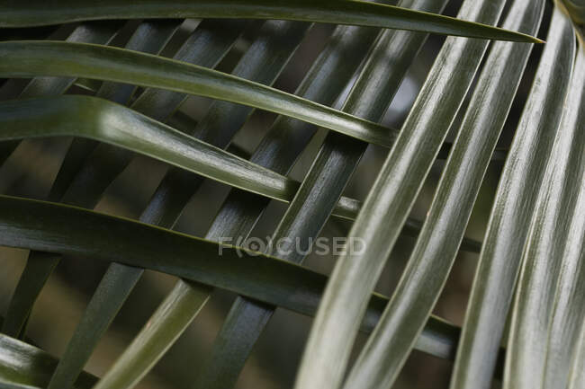 Green tropical palm leaves crisscrossing — Stock Photo