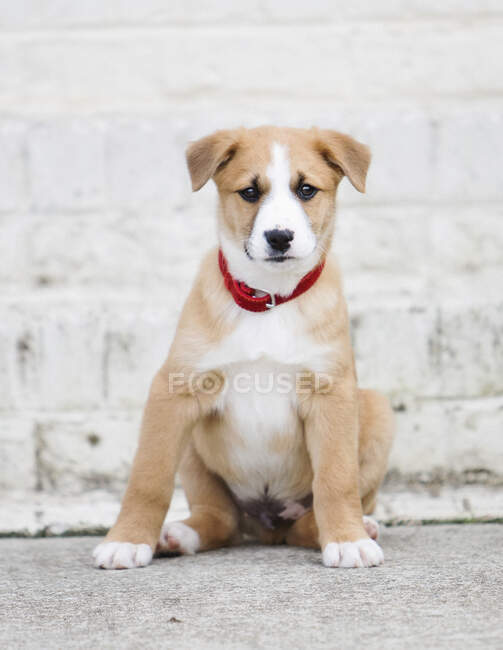 Portrait de chiot mignon — Photo de stock